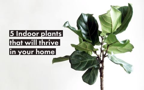 Thrive Guide - 5 Indoor Plants That Will Thrive in your